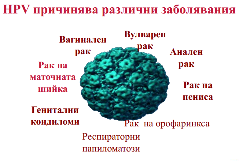 diagram_hpv_prichinqva